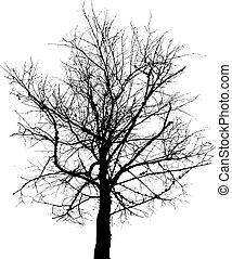Un plano del vector de árboles