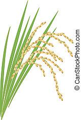 Un poco de arroz con hojas en un fondo blanco. Ilustración del vector.