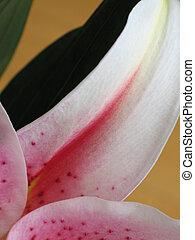 Un primer plano de flores