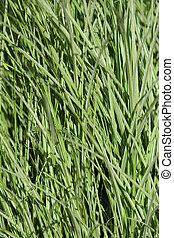 Un primer plano de hierba