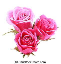 Un ramo de rosas rosados aislado en un corte de fondo blanco
