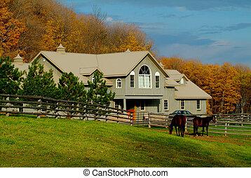 Un rancho de caballos