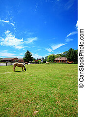 Un rancho de caballos con casa y cerca.