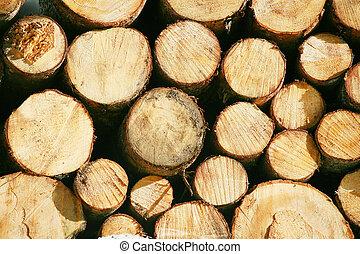 Un rayo de madera de madera corta