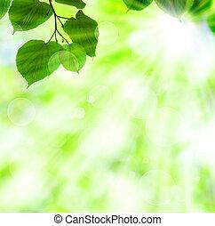 Un rayo de sol primavera con hojas verdes