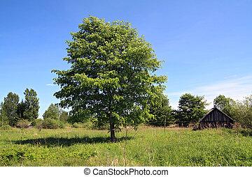 Un roble de primavera verde cerca de las aldeas