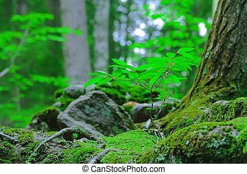 Un saludo creciendo en musgo en el bosque