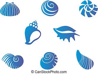 Un set de conchas marinas