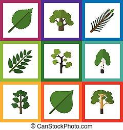 Un set de ecología plana de árboles, hojas de abeto, linden y otros objetos vectoriales. También incluye elementos siempre verdes, bosques, abetos.