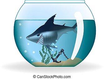 Un tiburón peligroso en un pequeño acuario