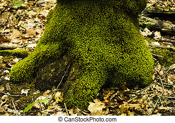 Un tronco con musgo
