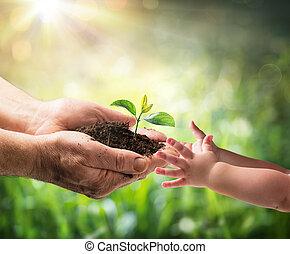 Un viejo dando plantas jóvenes a un niño, protección ambiental para la nueva generación