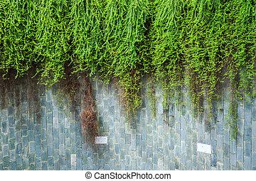 Un viejo muro de piedra con hiedra verde en el cruce subterráneo en Fort Canning Park, Singapur
