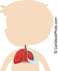 Una anatomía del pulmón humano