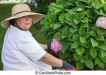 Una anciana deslizándose alrededor de un arbusto de hortensia