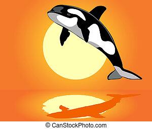 Una ballena asesina sobre el agua