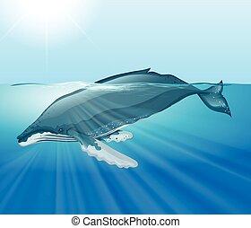 Una ballena gigante nadando en el océano