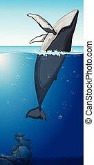 Una ballena jorobada en el océano