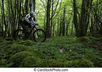 Una bicicleta en el bosque