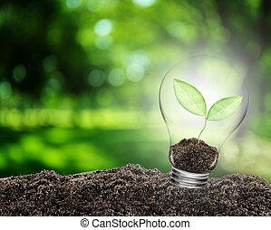 Una bombilla con planta creciendo dentro del suelo. El concepto de conservar el ambiente