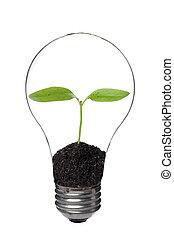 Una bombilla con una planta dentro