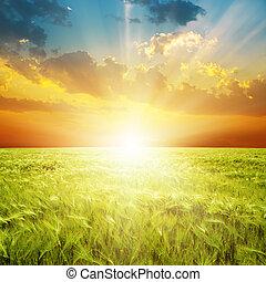 Una buena puesta de sol naranja sobre el campo de agricultura verde