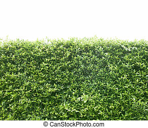 Una cerca verde