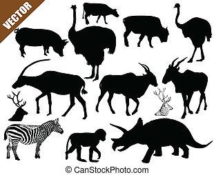Una colección de animales