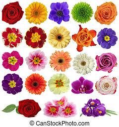 Una colección de flores