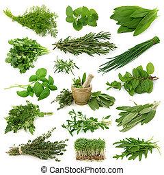 Una colección de hierbas frescas