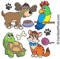 Una colección de mascotas