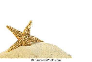Una estrella de mar en una colina de arena