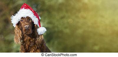 Una graciosa tarjeta de navidad para perros