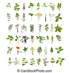 Una gran colección de hierbas y flores