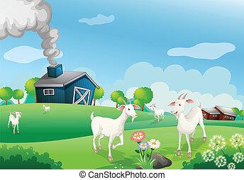 Una granja con muchas cabras