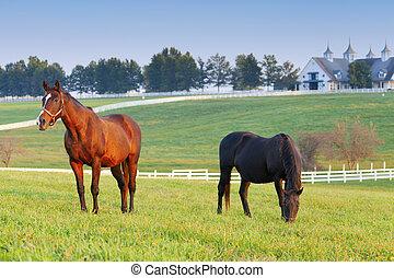 Una granja de caballos