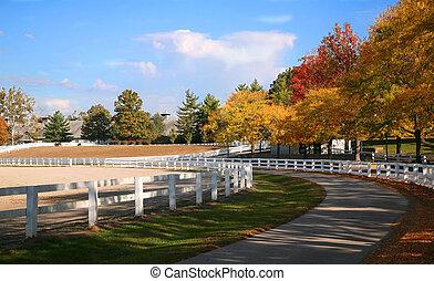 Una granja de caballos de Kentucky