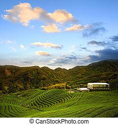 Una granja de té verde con cielo azul