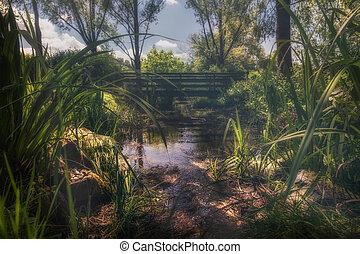 Una hermosa escena del paisaje en un pequeño río en el parque