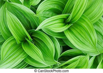 Una hermosa planta verde