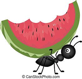 Una hormiga con sandía