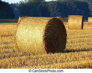 Una imagen de Golden Hay Bales en el campo