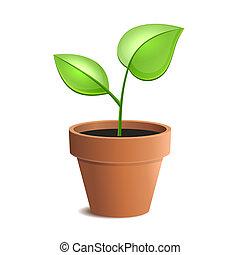 Una joven planta verde aislada en el fondo blanco. Vector