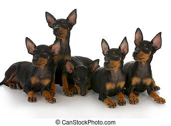 Una lista de cachorros