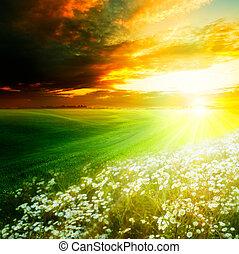 Una mañana brillante en las colinas verdes. Abstraer los orígenes naturales