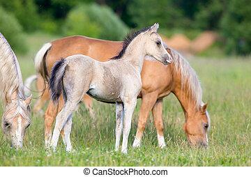 Una manada de caballos en el campo
