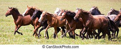 Una manada de caballos jóvenes