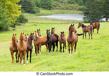 Una manada de caballos