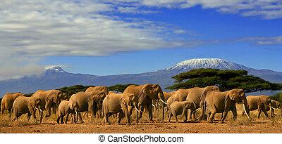 Una manada de elefantes africanos