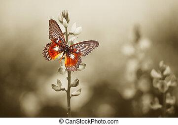 Una mariposa roja en el campo de humor
